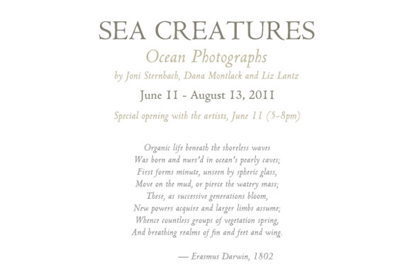 sea creatures carton