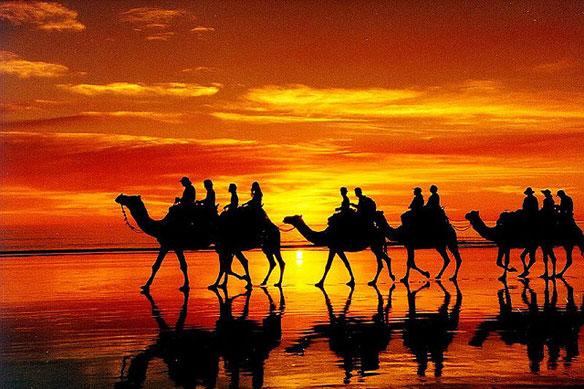 camels plastic pollution