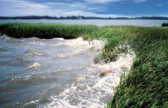 coastal wetlands sea level rise