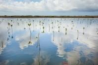 mangrove-plantation-bali