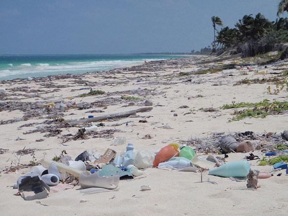 meso-reef-shores-mexico