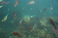 Outrage At Drilling Permit For Australia Reef