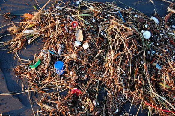 Plastic Found in Nine Percent of North Pacific Garbage Patch Fishes