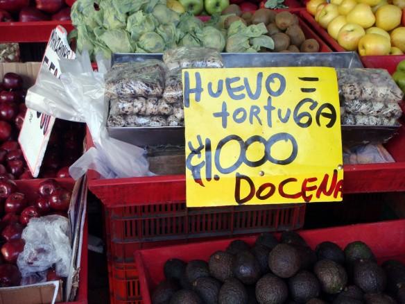 turtle-eggs-costa-rica