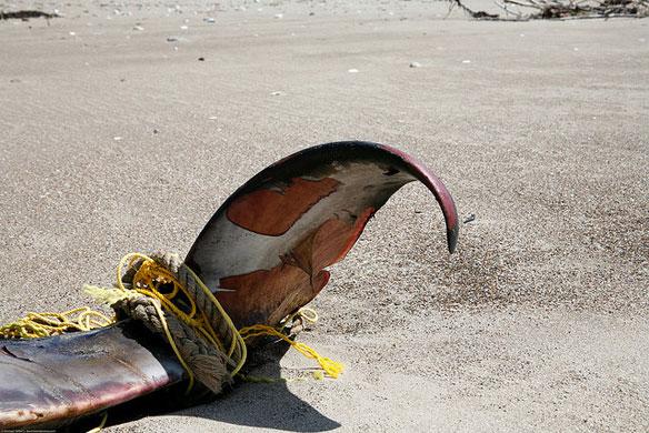 whale-marine-debris