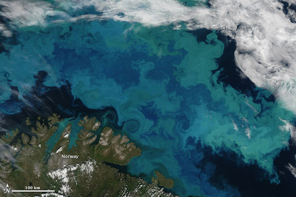 True colors : Bloom in the Barents Sea