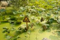 Green Algae Chokes Eastern China's Beaches