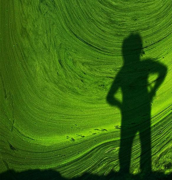 green algae india