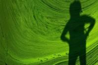 Environmental Impacts of Algae-Derived Biodiesel