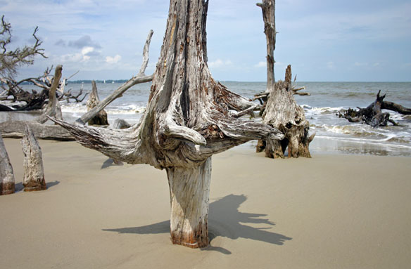 Jekyll Island, Georgia; By Blair & Dawn Witherington