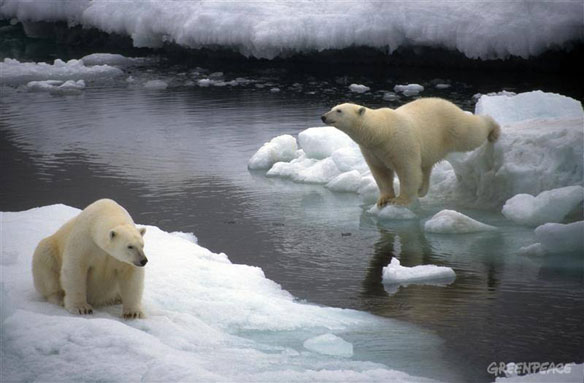 polar-bears-greenpeace