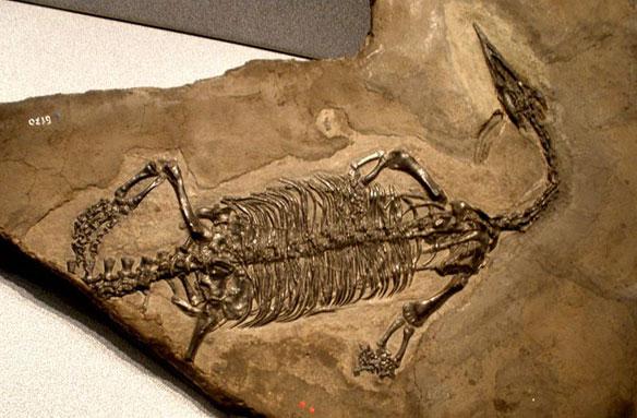 Rare fossil of sea reptile found on Alaska beach