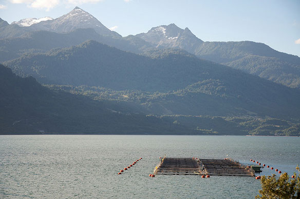 Chile Reels in Salmon Farming