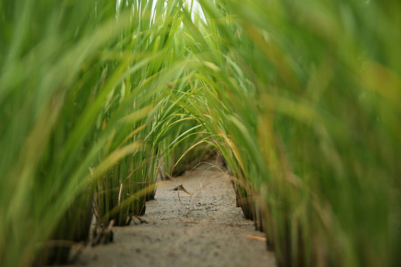 Japan finds radiation in rice, more tests planned