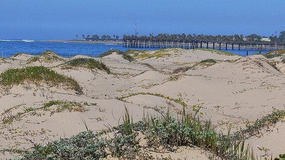 Sand Dune Bulldozed Without Permit, Ventura California