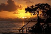 Stressors To Florida Keys Marine Ecosystem, A Study