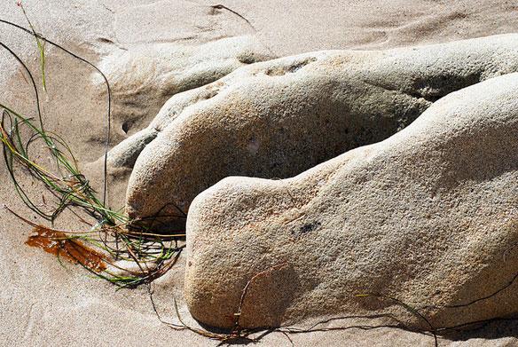 whale bones beach