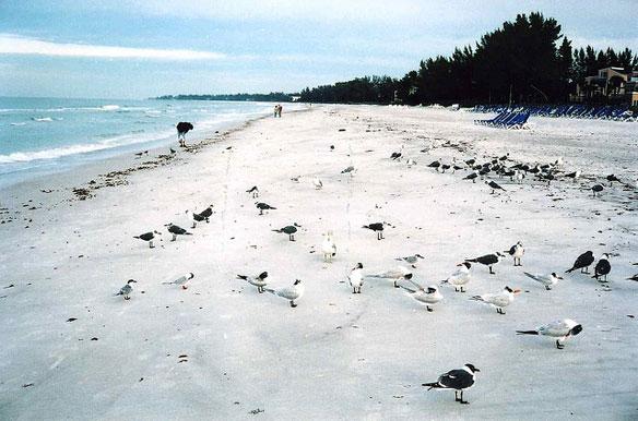 longboat-key-beach