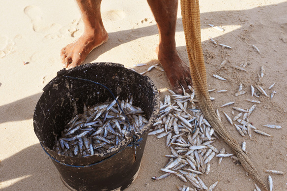 Pacific Island countries could lose 50 to 80% of fish in local waters under climate change