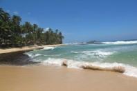 Sri Lanka wields mangroves, its tsunami shield, against climate change