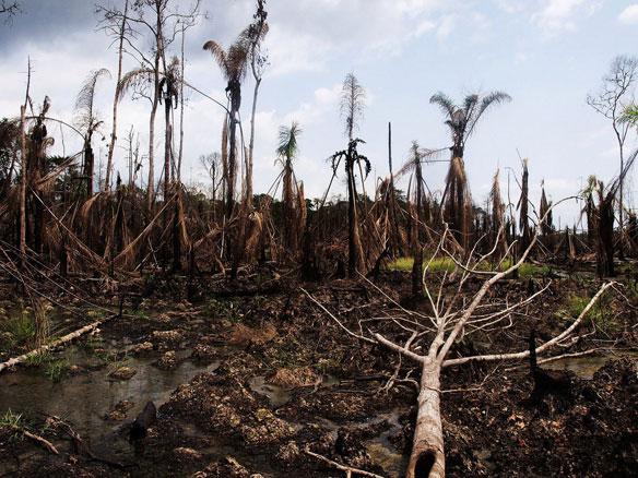 Niger Delta Oil Devastation