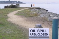 Oily: How A San Francisco Oil Spill Took Its Toll On Fish