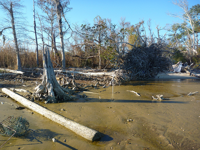 Oil Spill Brings Attention to Delicate Gulf Coast