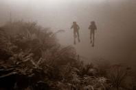 Detecting Detrimental Change in Coral Reefs