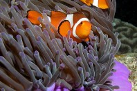 Reef Fish at Risk as Carbon Dioxide Levels Build