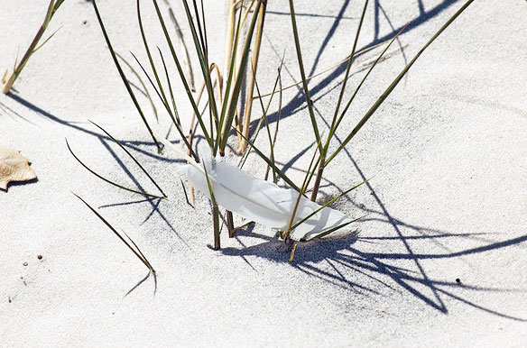 sugar-sand-feather2