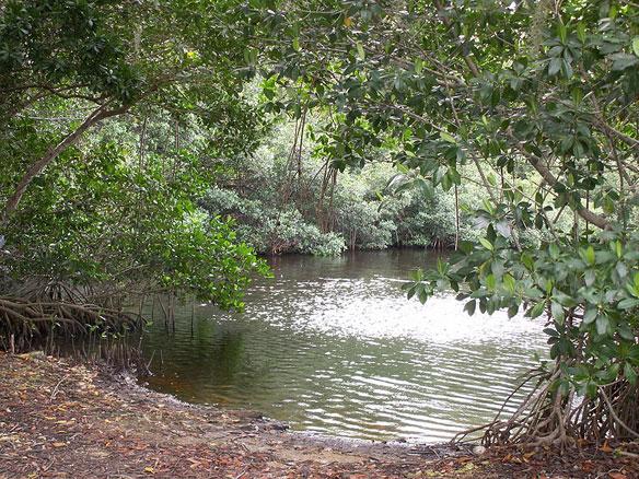 salwater wetland