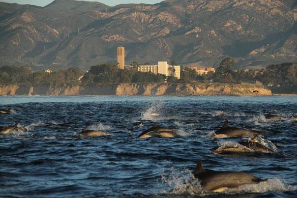 marine ecosystem protection
