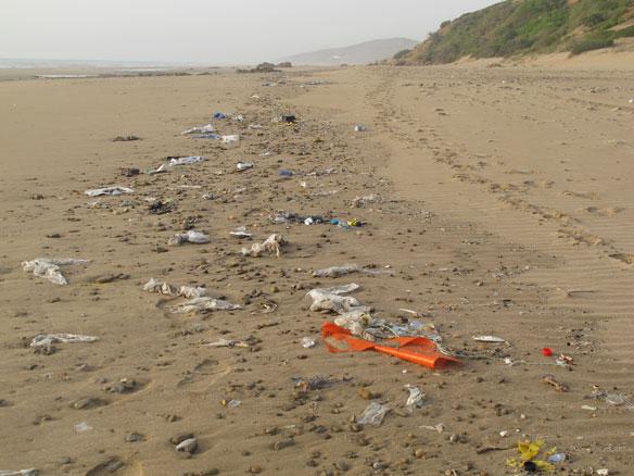 Better Beaches for Everybody