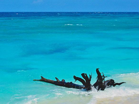 Climate change threatens Seychelles habitat