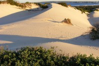 Former Sand Mining Site Being Considered for up to 2000 Homes, New South Wales