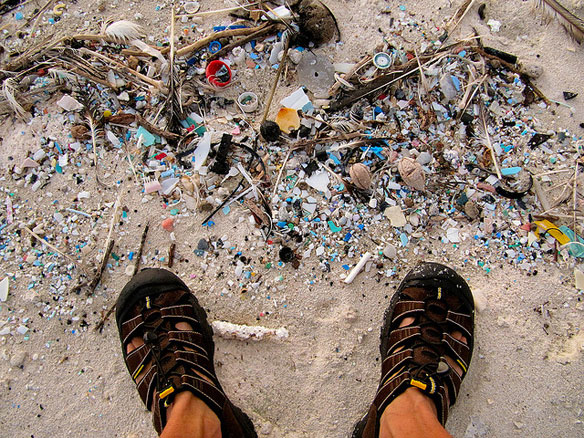 Ocean Litter Is Being Ingested By Humans
