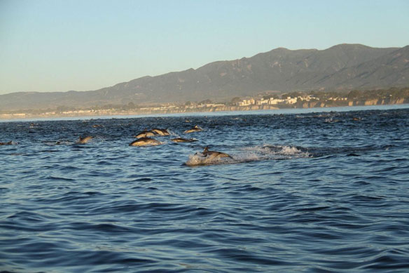 Navy study: Sonar, Blasts Might Hurt More Sea Life