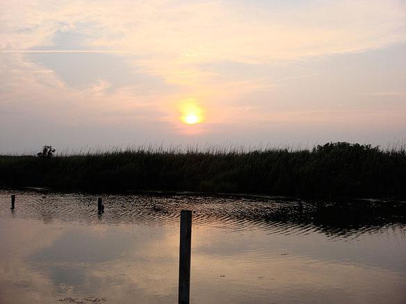 marshes-carolina