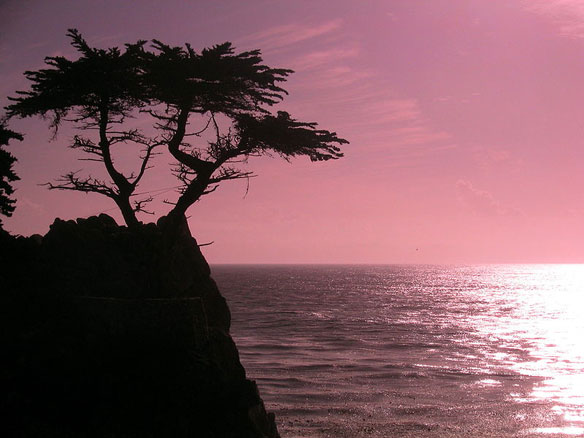 pebble-beach-lone-tree