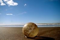 19,000 Sea Turtle Eggs Seized in Anti-Smuggling Operation