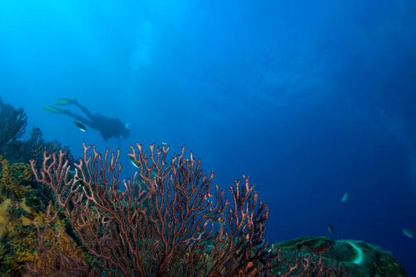 andrew-jalbert-coral