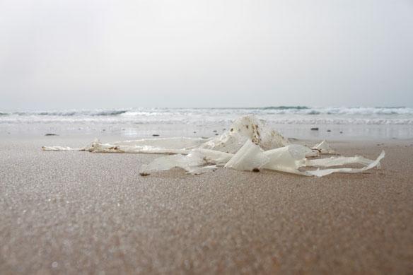Toronto Council Votes for Plastic Bag Ban