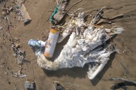 Bird chick clip on BBC One's Drowning in Plastic documentary leaved viewers in tears