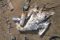 marine-debris-bird