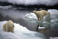 Save The Arctic Video, Greenpeace