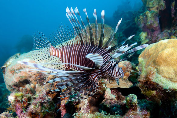 reef-fish-aj