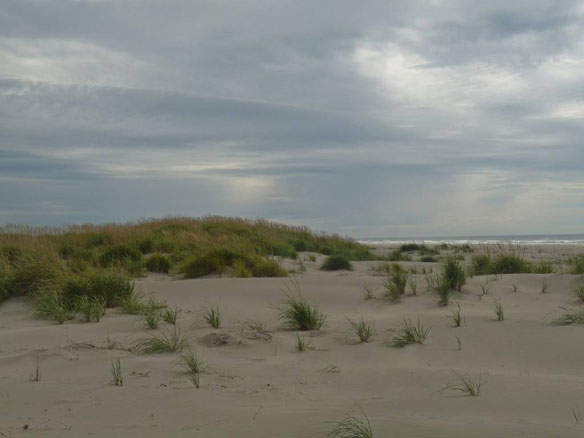 Army Corps Set to Begin Dune Restoration Project in Willapa Bay