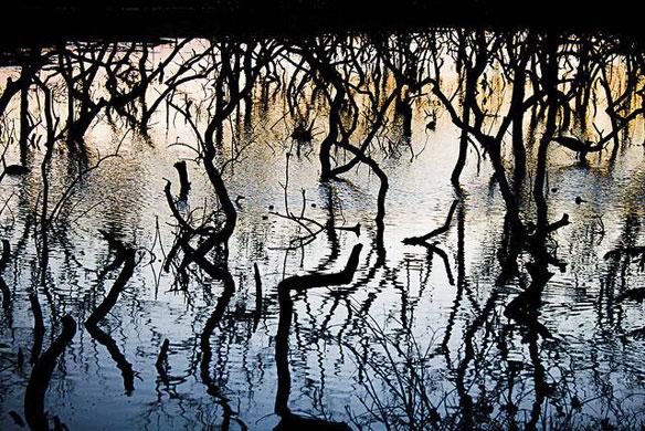 tears-0f-mangroves