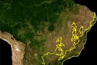 Brazil's Atlantic coastal forests lose key species