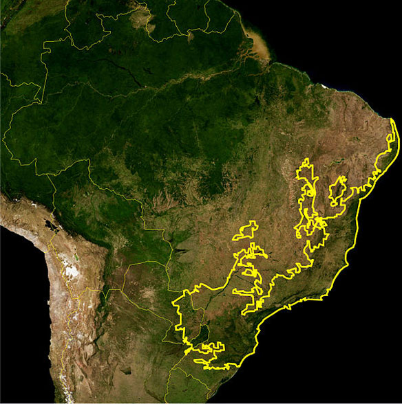 Brazil's Atlantic coastal forests lose key species